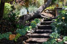 hillside landscaping | Steep Hillside Landscaping Steps Pictures