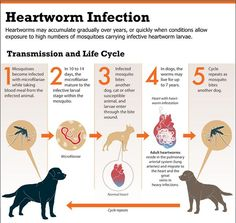 Know the signs of Heartworm Infection