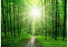 Fototapete Sunny Forest
