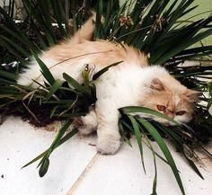 Preguiça...gatinha linda!