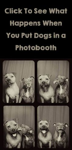 What happens when you put dogs in a photo booth? These pics are hilarious, click to see all 12 sets! http://theilovedogssite.com/heres-what-happens-when-you-put-dogs-in-a-photo-booth-12-pics/