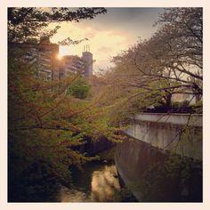 [サクラ*2012/04/18]    散歩道の桜❀