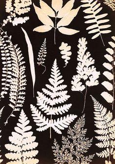 plant life photogram by watersedgechris, via Flickr