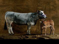 Yann Arthus Bertrand  http://www.yannarthusbertrandgalerie.com/