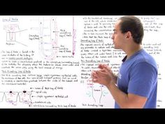 Countercurrent Multiplier System and Loop of Henle - YouTube