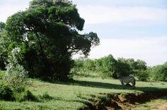Second day in kenya