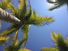 Weer en klimaat in Playa del Carmen Riviera Maya, Cactus Plants, Playa Del Carmen, Cacti, Cactus