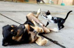 Chungo, un perro de apenas un año que ahora tiene su propio lugar en el refugio bomberil acompañado de su inseparable amiga, la gata llamada Niña. Ambos fueron abandonados en la zona norte de la ciudad y rescatados por los bomberos.