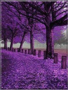 All roads lead to purple Purple Rooms, Purple Art, Purple Love, Purple Lilac, Shades Of Purple, Deep Purple, Pretty In Pink, Purple Punch, Purple Stuff