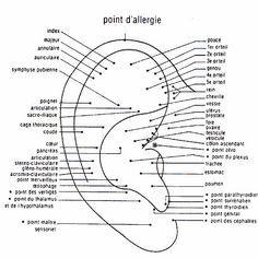 Points auriculothérapie: les points d'acupression sur l