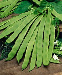 Skärböna. Fabaceae.