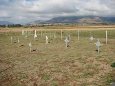Overview on British Military Graves My Land, Monuments, South Africa, Britain, Nostalgia, Military, War, History, Cemetery