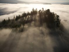 The Largest Patch of Old Growth Redwoods Remaining Photographic Print by Michael Nichols at Art.com