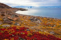 Arktische Tundra von Mario Hallbauer