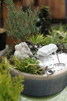 mini-gardens or fairy gardens - good list of plants to use
