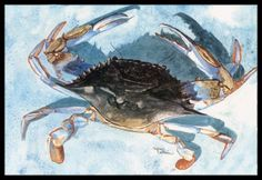Caroline's Treasures 8055-JMAT Crab Indoor or Outdoor Doormat, 24' x 36', Multicolor ** Check this awesome product by going to the link at the image.
