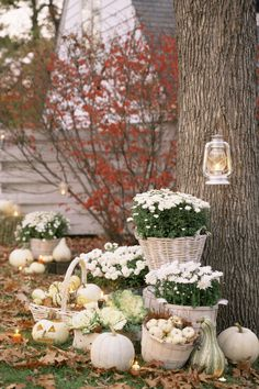 Try this pretty DIY alternative: Place white chrysanthemums and ornamental cabbage in cream-colored apple baskets on your front lawn, and surround with white pumpkins and gourds.