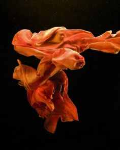 The Colour Red | Zena Holloway | DAM Artist