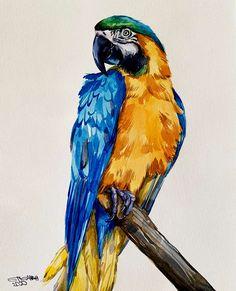 parrots watercolor paintings * parrots watercolor paintings ` watercolor paintings of parrots Bird Paintings On Canvas, Animal Paintings, Watercolor Paintings, Indian Paintings, Watercolor Portraits, Abstract Paintings, Parrot Drawing, Parrot Painting, Watercolor Bird