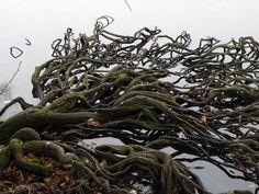 Roots by Eva Ekeblad ( Eva the Weaver, via Flickr)