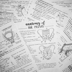 """WEBSTA @ studyingg - oml could the lighting be any worse?? this is why I never take my photos at night but i was out for the entire day today. the good thing is I've finished my anatomy notes on the pelvis, finally!♔want cute stationery with free shipping?? use the code """"STUDYINGG"""" at kawaiipenshop.com to get 10% off your purchase!♔#studying #studyblr #study #studyhard #studyspo #studygram #school #revision #student #motivation #stationery #muji #handwriting #vscocam #l4l #calligraphy…"""