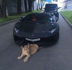 67 best ideas for luxury cars jeep lamborghini aventador Luxury Sports Cars, Top Luxury Cars, Sport Cars, Luxury Auto, Fancy Cars, Cool Cars, Supercars, Moto Design, Huracan Lamborghini