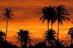"""Zanzibar Sunrise"" by Mario Moreno, via Savanna Animals, Silhouette Photography, Dusk Till Dawn, Before Sunrise, Gods Creation, Belleza Natural, Tree Of Life, Mother Earth, Wildlife"