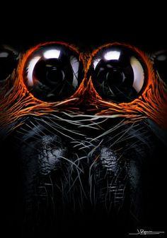 Eerie close up photos of JUMPING spiders eyes will send you running! Double Exposure Photography, Levitation Photography, Abstract Photography, Winter Photography, Micro Photography, Photography Tricks, Experimental Photography, Beach Photography, Beautiful Creatures