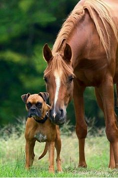 The cute friendship of horses and dogs has been going on for a long time. They are friends with all dogs, do you want to make sure of this? Let's start watching funny photos. Horses And Dogs, Animals And Pets, Dogs And Puppies, Funny Animals, Cute Animals, Doggies, Pretty Horses, Horse Love, Beautiful Horses