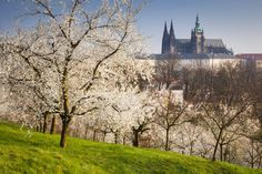 Prague's famous hillside park offers amazing views of the city, plus a replica of the Eiffel Tower.