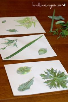 Setup to match leaf rubbings - Want to do