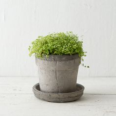"""Earth Fired Clay Wide Rim Pot + Saucer, Slate 4-10"""" in Garden Earth Fired Clay Pots at Terrain"""