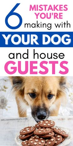 6 Common mistakes dog owners make when inviting over guests - You could be making them too! Dog Hacks, Dog Care, Dog Owners, Dog Mom, Mistakes, Dog Food Recipes, Puppies, Dogs, Animals