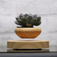 This modern artistic flower/bonsai tree pot uses Maglev Levitation Technology to float. Perfect for small indoor bonsai / herbs. Unique addition to the decor. Great for office decor! Small Plants, Air Plants, Potted Plants, Floating Plants, Floating Flowers, Indoor Bonsai, Indoor Plant Pots, Indoor Gardening, Succulent Pots