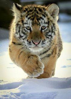 Snow Baby.......