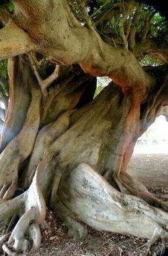 Twisted gnarled tree