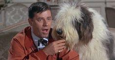"Devo Tudo ao Cinema: ""Errado Pra Cachorro"", de Frank Tashlin"