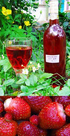 Guide on how to make homemade wine using fruit, berries, herbs, and vegetables. Includes recipes for sweet Strawberry wine and floral Rose Petal wine Homemade Wine Recipes, Homemade Alcohol, Homemade Liquor, Healthy Recipes, Wine And Liquor, Wine And Beer, Drink Wine, Mead Wine, Strawberry Wine