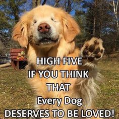 Cute funny animals, funny dogs, cute dogs and cats, i love dogs, Animal Quotes, Dog Quotes, Animal Memes, Cute Funny Animals, Funny Animal Pictures, Funny Dogs, Cute Puppies, Cute Dogs, Dogs And Puppies