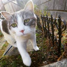おはようございます😋🌵 みなさまいかがお過ごしですか? うちの山葵はコタツと冷蔵庫の上をいったり来たりしております🤣✨ . やっぱり猫も人間もあったかいとこが好きですよね〜〜😍 以上!そんな飼い主のお布団からの中継でした〜〜🐾🛌笑 . #cat#ilovecat#meow#happy#love#lovecat#mycat#catstagram#gopro#hero5#GoProJP#goprohero5 #tbt #愛猫#山葵#散歩#庭#快晴#ゴープロのある生活#冬毛#もふもふ#サバシロ#ふわもこ部#ねこ#ねこ部#にゃんすたぐらむ