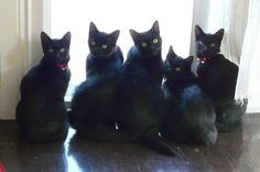 black cats are good luck. Yes they are good luck. Incensewoman