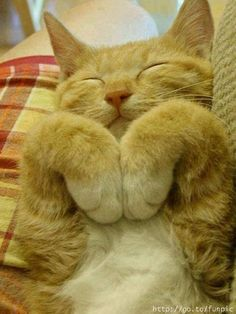 ¿Duermo o hago yoga? Parece que está meditando.