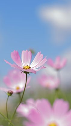 Love song by Hajime Morigami #flowerphotography #photography