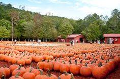 Burt's Pumpkin Patch - A Fall Family Ritual While Visiting Cherry Log!