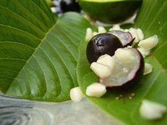 Frutas exoticas y raras