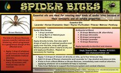 Spider bites and young living oils www.healingforus.com