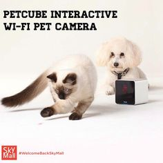 Meet the next generation of pet monitors that lets you keep an eye on your dog or cat from wherever you are-and send them some love too! Shop SkyMall.com