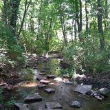 Beautiful hiking trails at asylum lake preserve - Michigan Trails   AllTrails.com