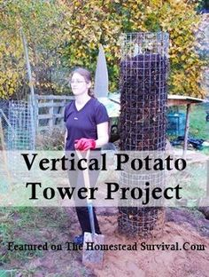The Homestead Survival | Vertical Potato Tower Gardening Project | Homesteading - Gardening - Green thumb Knowledge