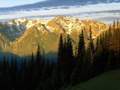 Hurricane Ridge in Olympic National Park.  No picture will ever capture the breath taking beauty here...the gorgeous views are endless.  Next time I go I'll bring my video camera!